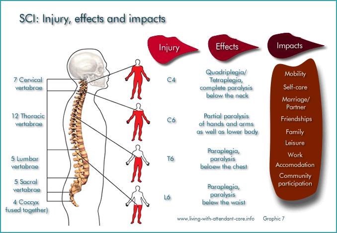 spinal cord injury essays